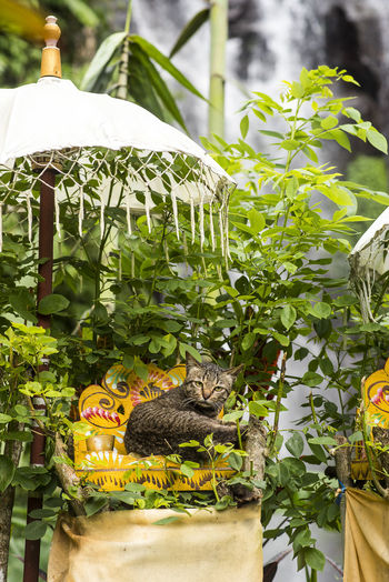 View of cat on plant