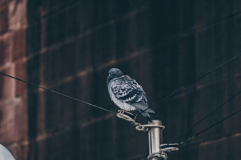 Low Angle View Of Bird Perching On Pole Against Building