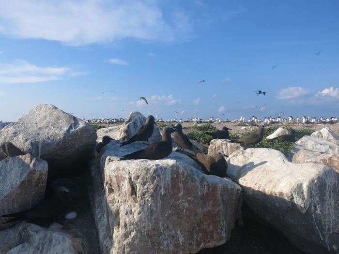 Birds flying over rocks against sky