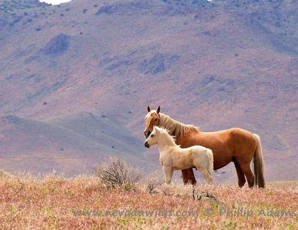 Beautiful Animals  Beautiful Nature Halamadrid Awww Horse Horses Horse <3 Beautiful Horses I Love Horses