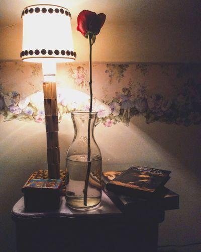 Rose🌹 Illuminated Calidez