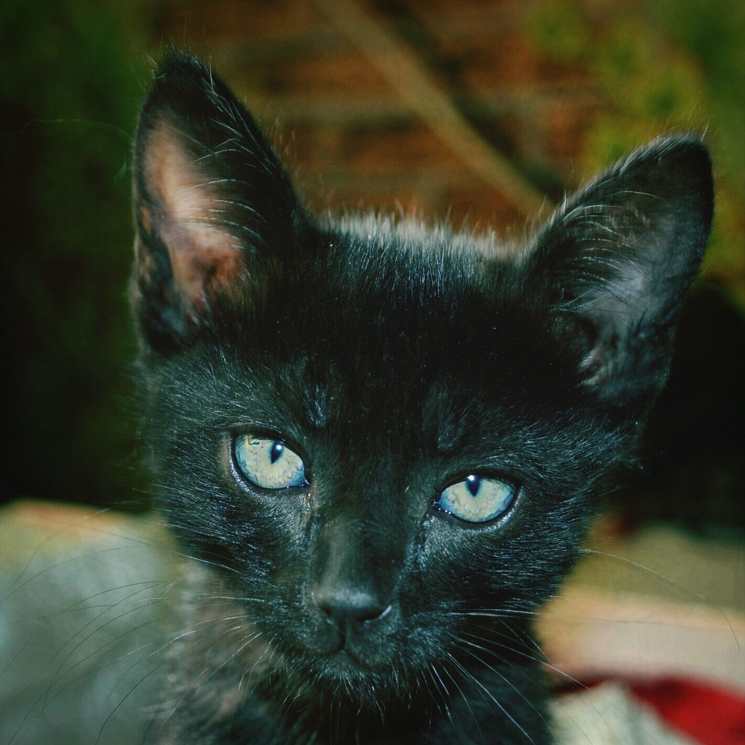 pets, domestic cat, one animal, animal themes, domestic animals, cat, mammal, whisker, feline, portrait, looking at camera, close-up, focus on foreground, black color, indoors, staring, animal head, alertness, animal eye