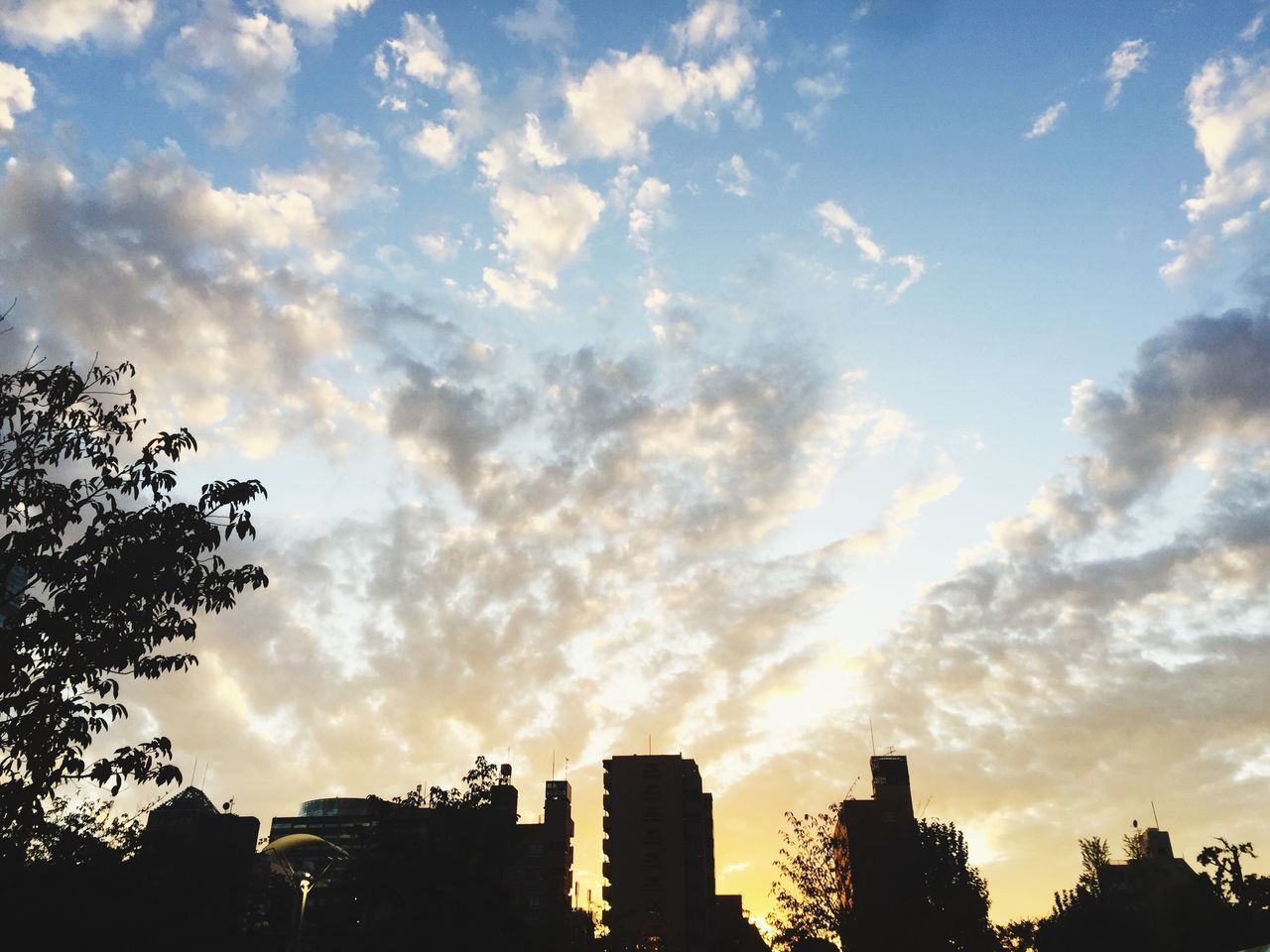 sky, silhouette, cloud - sky, low angle view, architecture, building exterior, tree, built structure, sunset, no people, outdoors, beauty in nature, growth, nature, city, day