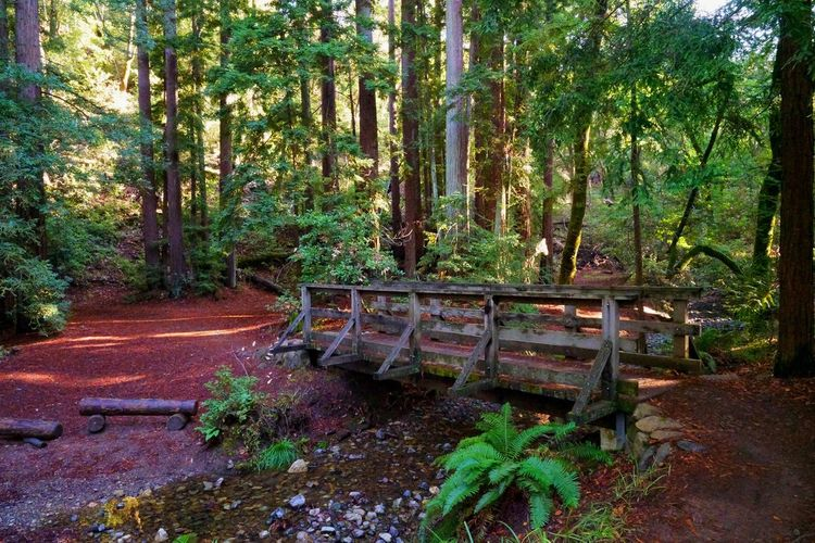 Come join me and cross over to Redwood Forest. My USA Journey Bridge - Man Made Structure Forest Nature Landscape Green Color Hike Sony Vacations EyeEm Best Shots EyeEm Nature Lover EyeEm Selects EyeEm Gallery EyeEm EyeEmBestPics Eyeemphotography Idyllic Tranquility Tranquil Scene Scenics Scenics - Nature Travel Travel Destinations USA California Tree Forest Green Color Growing Tree Trunk Woods Lush Foliage Greenery Green Plant Life Sunrays Moss Plant Bark Fungus Leaves Countryside Branch Young Plant Stay Out