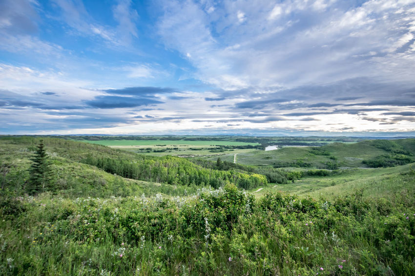 Alberta Blue Canada Clouds Cochrane, Alberta Glenbow Ranch Provincial Park Grass Green Landscape Landscape_Collection Landscape_photography Nature Nature_collection Sky Summer Trees Wide Angle