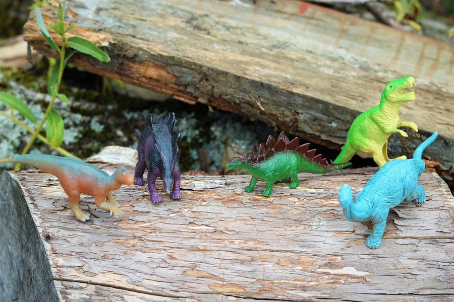 Dinosaurs Creative Play Photography Creativity Dinosaurs Toys Child's Play Close-up Day Focus On Foreground Game Green Color High Angle View No People Not Real Outdoors Plant Plastic Toys Tree Wood - Material