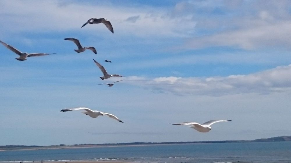Gulls In Flight Sky And Clouds Beachphotography Seagulls In Flight Wingspan British Birds Flying Free