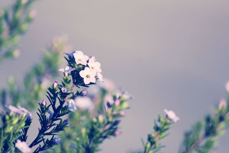 Close-up of purple flowering plant against sky