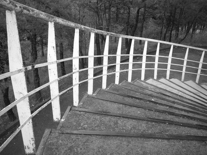 Staircase of bridge against trees