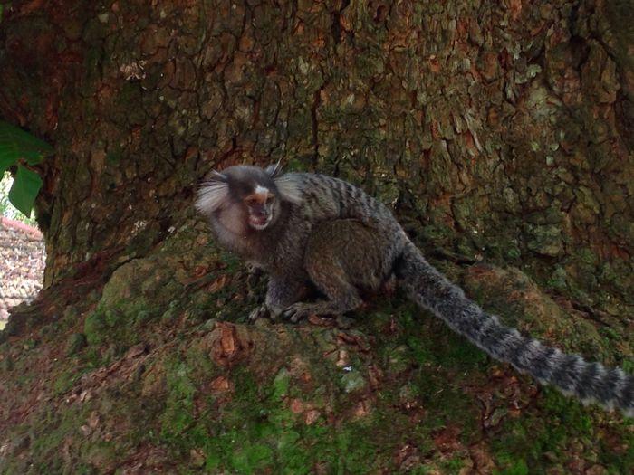 Naturephotography Animal Wildlife