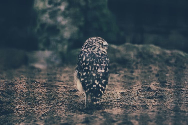 Animal Themes Animals In The Wild Beauty In Nature Bird Bird Of Prey Field Focus On Foreground Nature No People One Animal Outdoors Selective Focus Wildlife Zoology