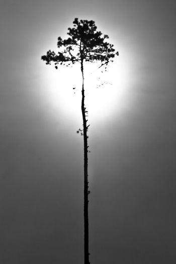 Sun halo around a pine tree. Beauty In Nature Clear Sky Day Deforestation Deforestation Effect Landscape Logging Logging Site Lone Nature No People Outdoors Sky Tranquil Scene Tranquility Tree