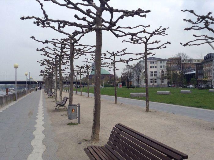 Outdoors Tree City Day