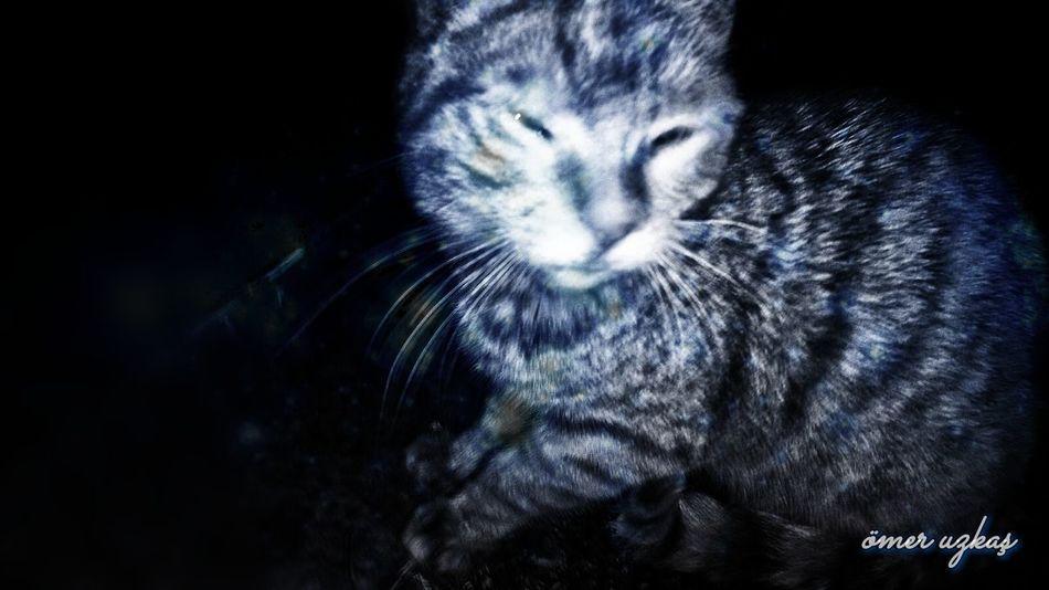 Cat Cat♡ Cats 🐱 Cat Eyes The Great Outdoors With Adobe First Eyeem Photo Nature Clorful Alone. Kedi Kedicik Kedidir Kedi Kedicik 🐈 Kedican Kedigiller Kedi Aşkı Kediseverler Kedi Gibi