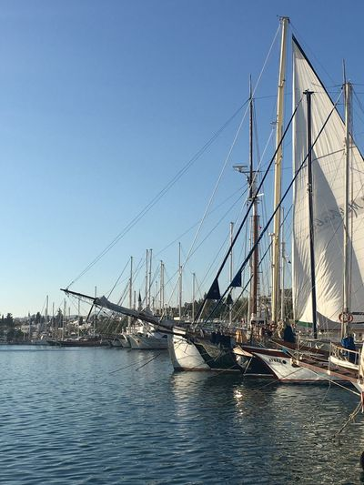 Sea Life Sealife Bodrum #holiday #sailing Sunset_collection White Beach Outdoors Day Sea And Sky Sailing Boat Many Moored Sails Up Old Boats No People Beautiful Still Life