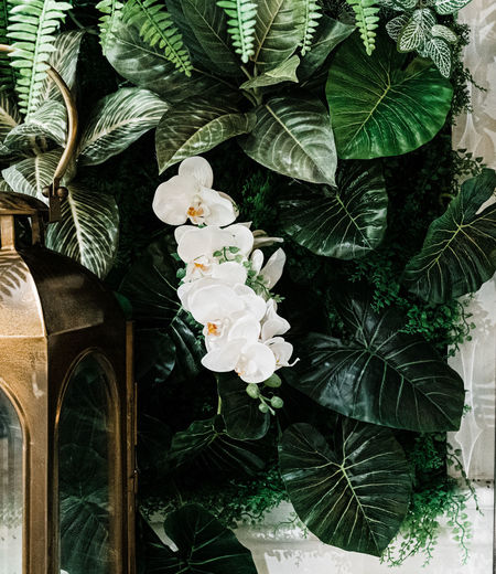 decorate plant vintage with lamp Plant Leaf Plant Part Growth Flower Nature Flowering Plant No People Beauty In Nature Green Color Freshness Close-up Day Outdoors Fragility Vulnerability  Tree White Color Decoration Petal Flower Head