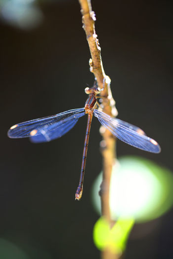 Close-up of dragonfly on plant stem