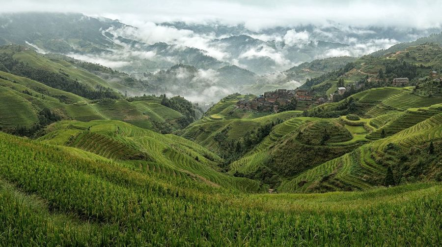 Longji Rice Terraces Beauty In Nature China Countryside Eyem Best Shots Field G Green Landscape Longji Rice Terrace Morning Nature Nature Outdoors Physical Geography Rice Terraces Scenics Tranquil Scene Tranquility Finding New Frontiers