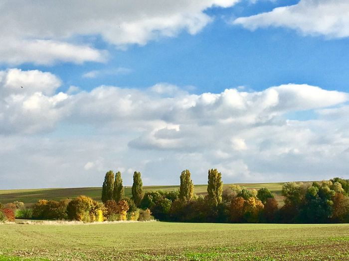 Sky Field Landscape Nature Growth Cloud - Sky Scenics Tranquil Scene No People Beauty In Nature Tree Rural Scene Tranquility Grass Agriculture Day Green Color Outdoors