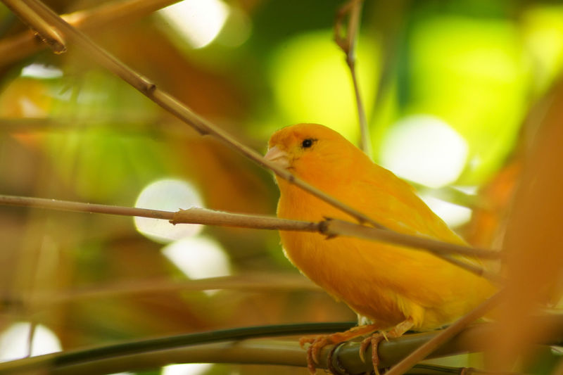 Portrait of a bird Animal Animal Themes Bird Vertebrate Animal Wildlife Perching One Animal Animals In The Wild Yellow No People Close-up Day Focus On Foreground Parrot Nature Selective Focus Branch Outdoors Plant Beauty In Nature