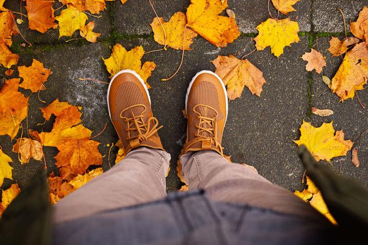 Autumn Colour Of Life Leaves Nikon Red Sunday Sunny Wonderful Yellow First Eyeem Photo