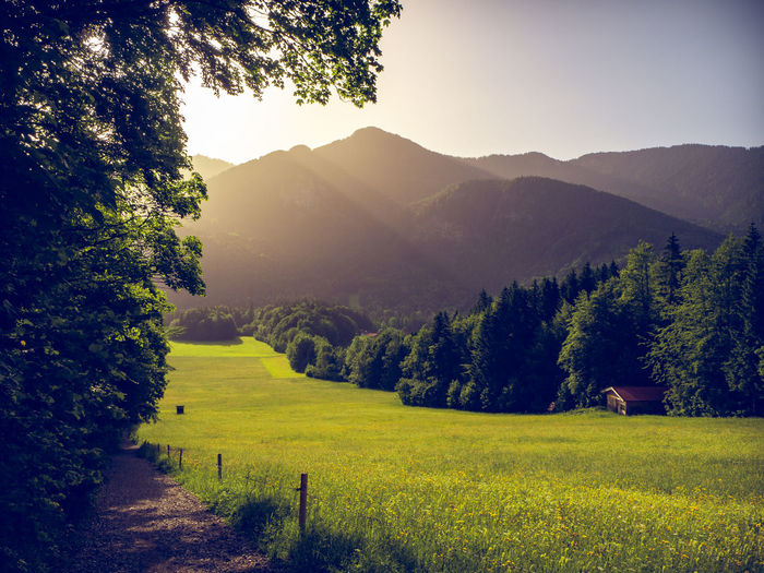 way up to hirschberg in the bavarian alps in the background with the peack of Wallberg mountain. Scharling, Bavaria, Germany, June 2019 Germany Hirschberg Tergernsee Way To Hirschberg Wandern Wandern In Den Alpen Weg Pfad Plant Mountain Beauty In Nature Landscape Environment Scenics - Nature Tree Green Color Land Tranquility Nature No People Tranquil Scene Grass Growth Sky Outdoors Non-urban Scene Mountain Range Tegernseer Berge Field Idyllic