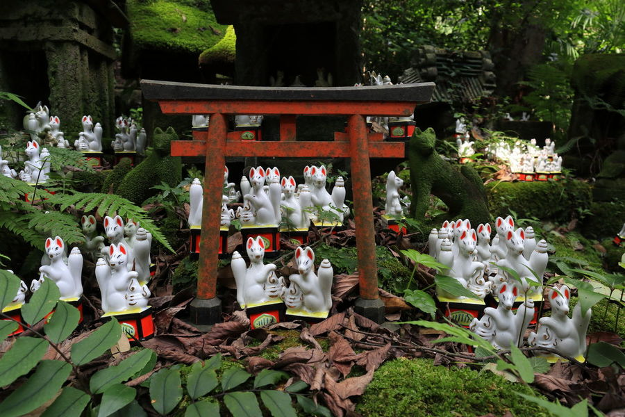 佐助稲荷 Inari Shrine Shrine Shrine Of Japan TORII Figurine  Fox Greeen Inari Moss Statue Tree 稲荷神社