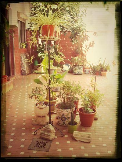 Patio Plantas Fotosíntesis  Sumidero