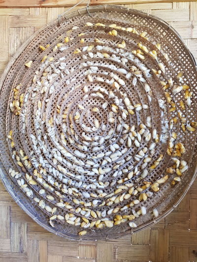 Agriculture Silkworm Cocoon Silk Production Silk Worms Silkworm Bamboo Tray Silkworm Tray Silkworms Worm