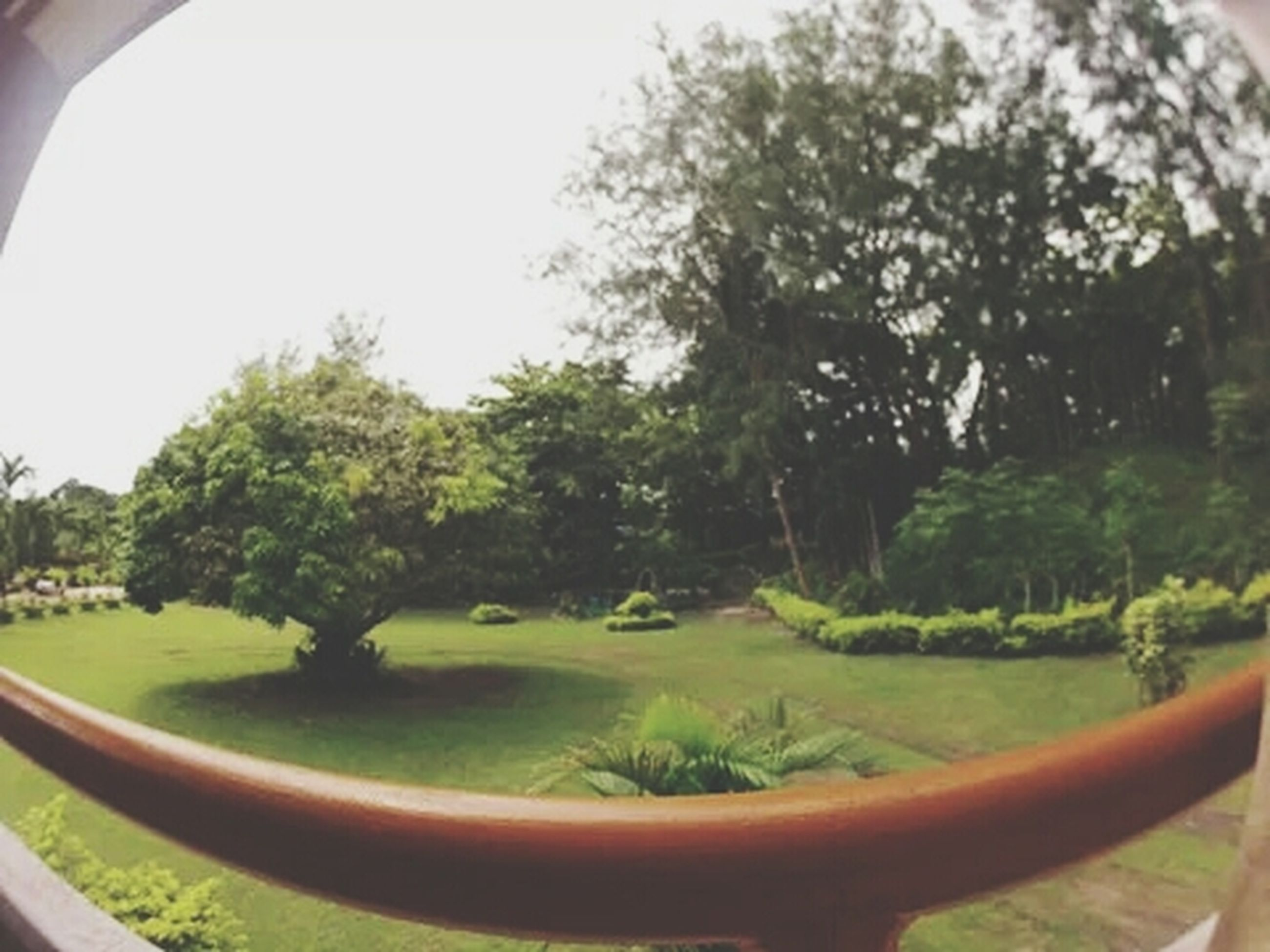 tree, green color, growth, grass, nature, tranquility, plant, park - man made space, beauty in nature, landscape, field, tranquil scene, green, scenics, day, water, lush foliage, sky, outdoors, sunlight