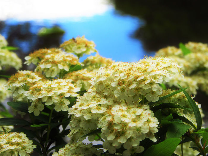 Close-up Flower Flower Head Green Color Leaf Nature No People Outdoors Plant Water White Color
