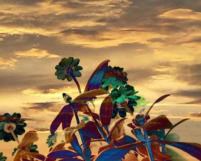 Flowers Flower Photography Flowers And Sky Reaching For The Sun Clouds And Sky Double Exposure Pivotal Ideas
