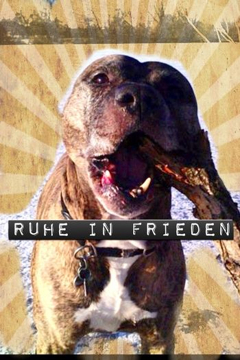 Rip Dog Canine