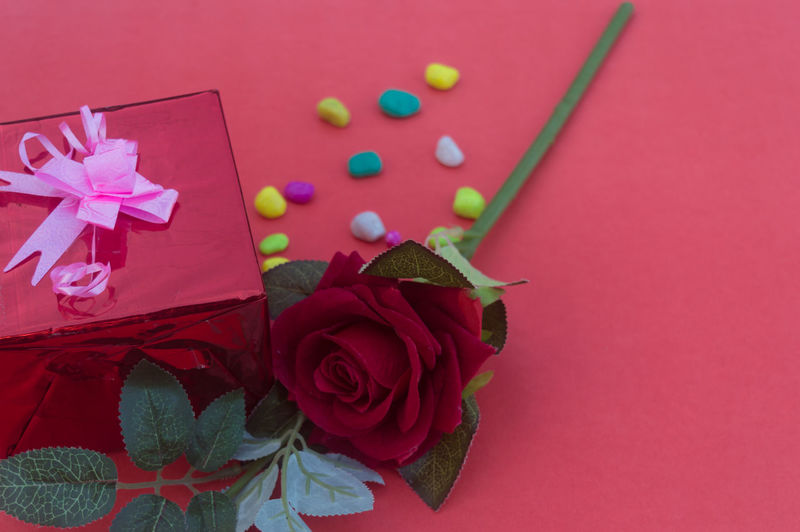 High angle view of pink roses against red background
