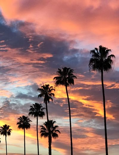 IPhone 7 Plus IPhoneography EyeEm Nature Lover EyeEm Best Shots Palm Tree Tree Sunset Beauty In Nature Tree Trunk Silhouette Sky Cloud - Sky Scenics Tranquility Nature Orange Color Tranquil Scene Idyllic Growth No People Outdoors Day Colour Your Horizn California Dreamin