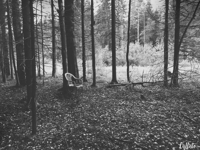 Blackandwhite Black & White Monochrome Black And White Photography Blackandwhitephotography Eye4photography  Only Black And White Photographs EyeEm Best Shots - Black + White чернобелое Streetphotography Russia Streetphotography_bw WOW Nature Forest Лес Chear