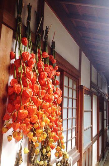 ほおずき 鬼灯 京都 仁和寺 Kyoto Ninnaji Temple