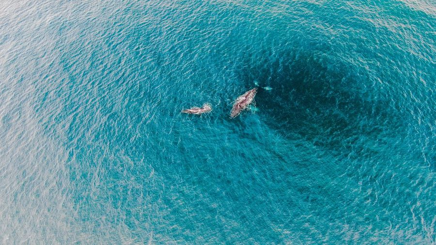 Aerial view of whale swimming in sea