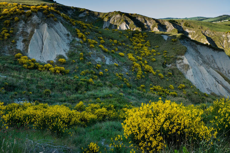 VOLTERRA, TUSCANY - MAY 21, 2017 - Yellow wild gulls surround the hills leading from Volterra to the medieval village of Mazzolla Beauty In Nature Day Landscape Mountain Mountain Range Nature No People Outdoors Rock - Object Scenics Sky Travel Destinations Tundra Volterra Volterra Toskana
