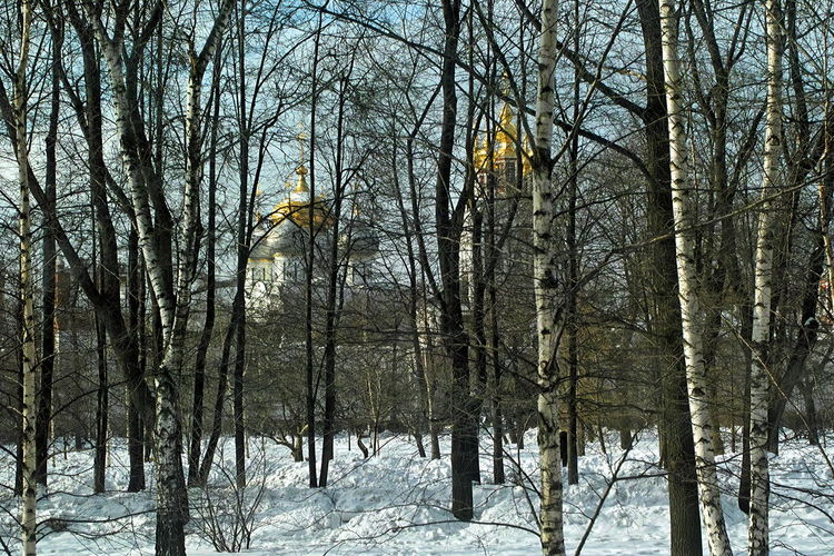 Moscow in March Bare Tree Beauty In Nature Branch Cold Temperature Day Forest Landscape Moscow In March Nature No People Orthodox Church Outdoors Scenics Sky Snow Tranquil Scene Tranquility Tree Winter