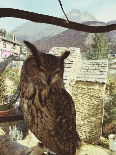 Animals Owl