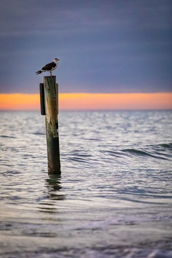 Seagull on wooden post in sea against sky
