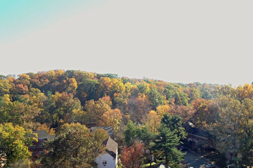 Sunny Day Catching The Light Tree Tops The View From My Window Autumn Day