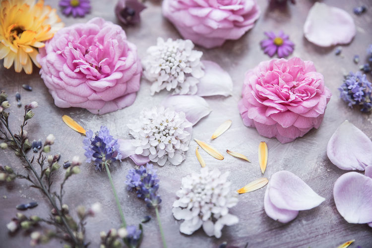 Flowers Background Beauty In Nature Blossom Close-up Colorful Decoration Fine Art Photography Flower Flower Collection Fragility Garden Flowers Garden Photography Moodboard Petal Pink Color Roses Still Life Summer Pastel Colors