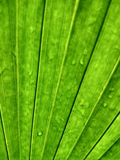 EyeEm Selects Green Color Nature Leaf Backgrounds Freshness Close-up No People Growth Full Frame Day Beauty In Nature Fragility Outdoors India