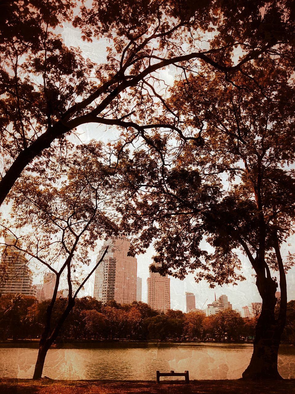 tree, built structure, architecture, building exterior, water, growth, branch, outdoors, no people, sky, day, river, nature, sunlight, city, beauty in nature, skyscraper