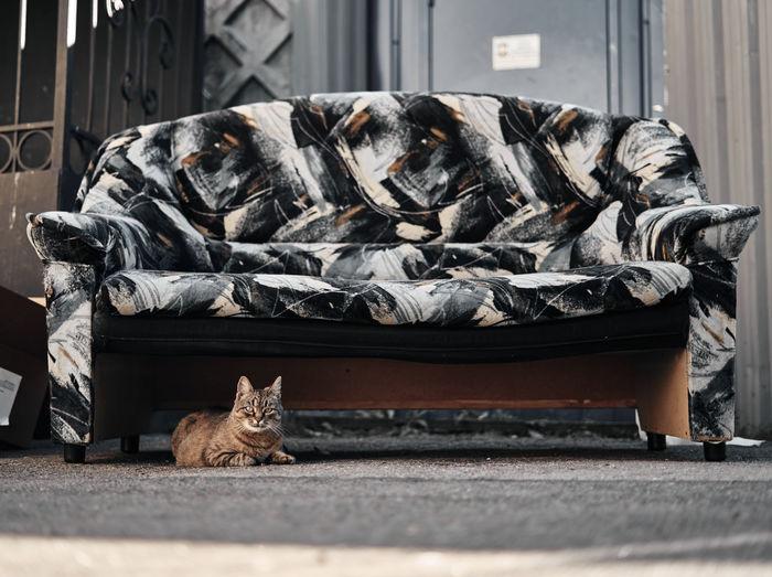 Cat sleeping under coach