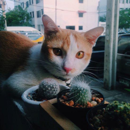 Hello ! My name's jerry Cat Hi! Jerry Home Cactus