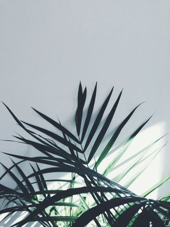 | green | Green Plant Minimalism Simplicity Minimal Justgoshoot Tv_simplicity Tv_living Dm_photolife Cityscapes Ig_minimalistic Ig_worldclub Ig_minimalist Ig_minimalshots Ig_mood Ig_captures Ig_daily Ig_europe Ig_greece Ig_athens VSCO Vscocam Vscogood Worldcaptures