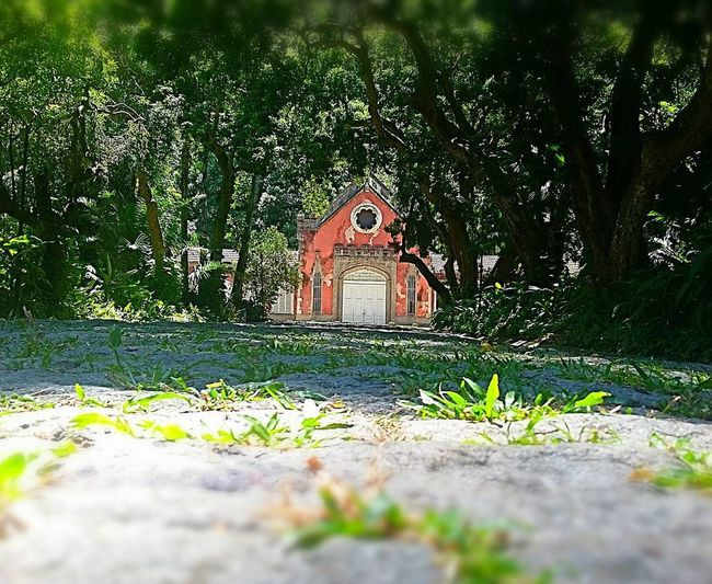 Parque Lage RJ Nature Photography Jangle Cristo Redentor Church